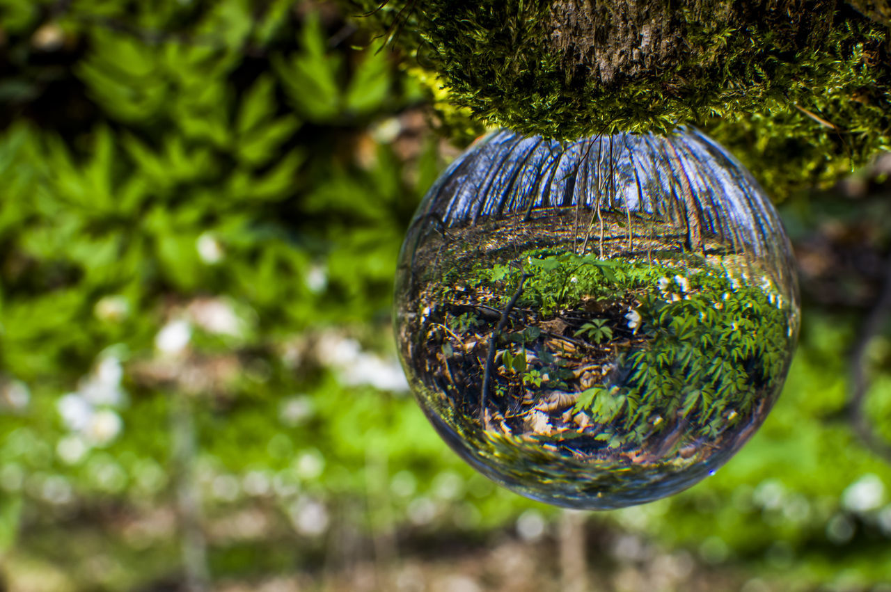 sphere, tree, reflection, day, no people, focus on foreground, hanging, close-up, outdoors, nature, fragility