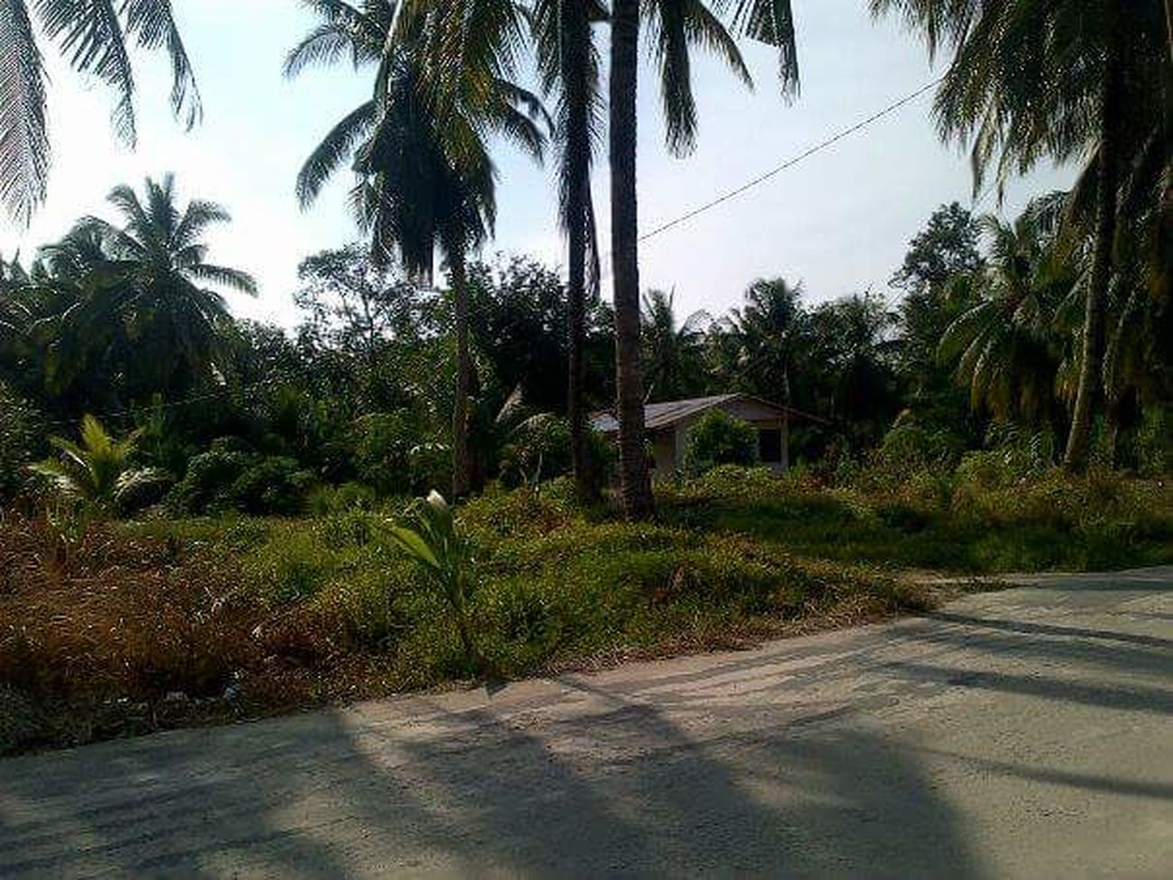 Village Rupatisland Coconut Trees Streetphotography Peace And Quiet
