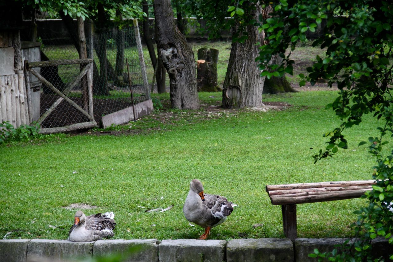 bird, animal themes, day, outdoors, nature, animals in the wild, no people, green color, grass, tree, animal wildlife, growth