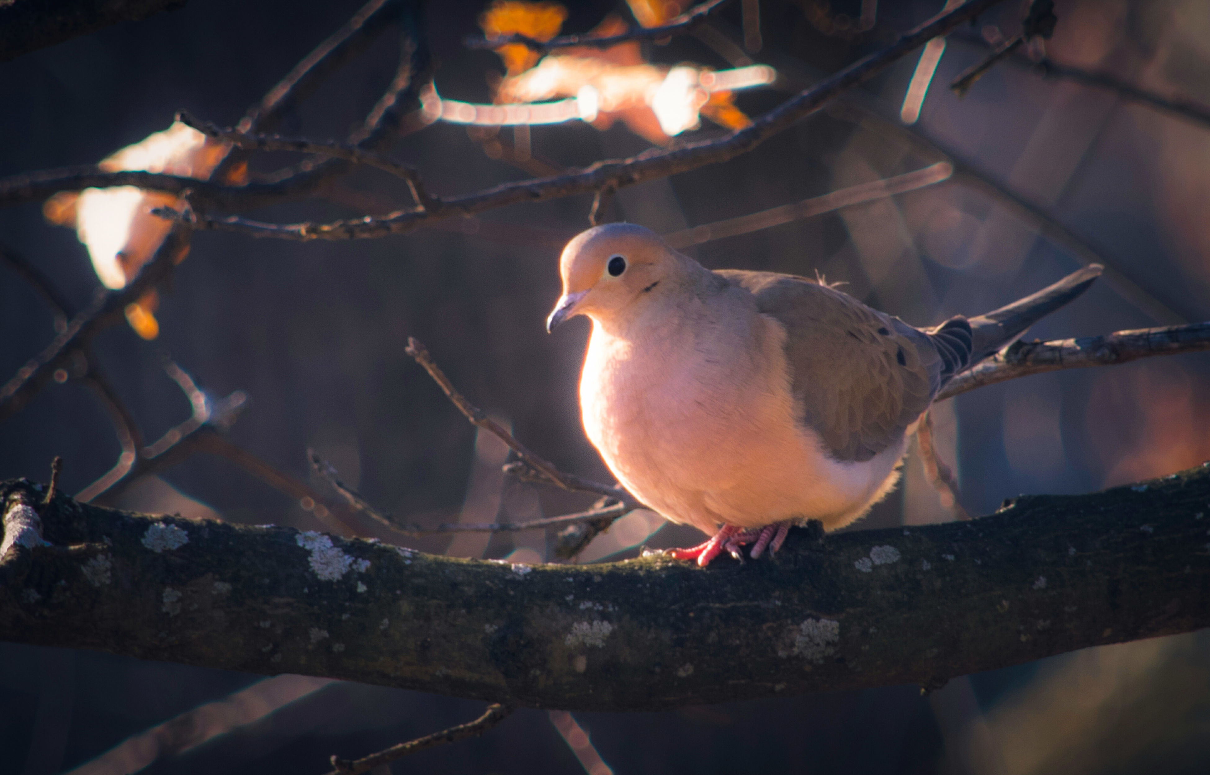 bird, animal themes, animals in the wild, perching, animal wildlife, no people, branch, close-up, outdoors, day