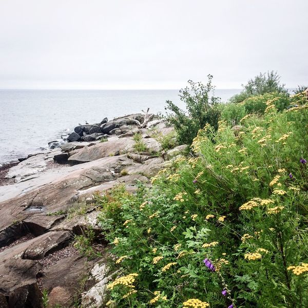North Shore Lake Superior Lake Superior Lakeshore Cloudy Skies Great Lakes North Shore Minnesota Gray Day. Gray Sky Rocks And Water Rocks On The Shore Yellow Flowers Wildflowers Green Grass Flowers Green Trees Purple Flowers Landscape Landscape_photography Landscape_Collection