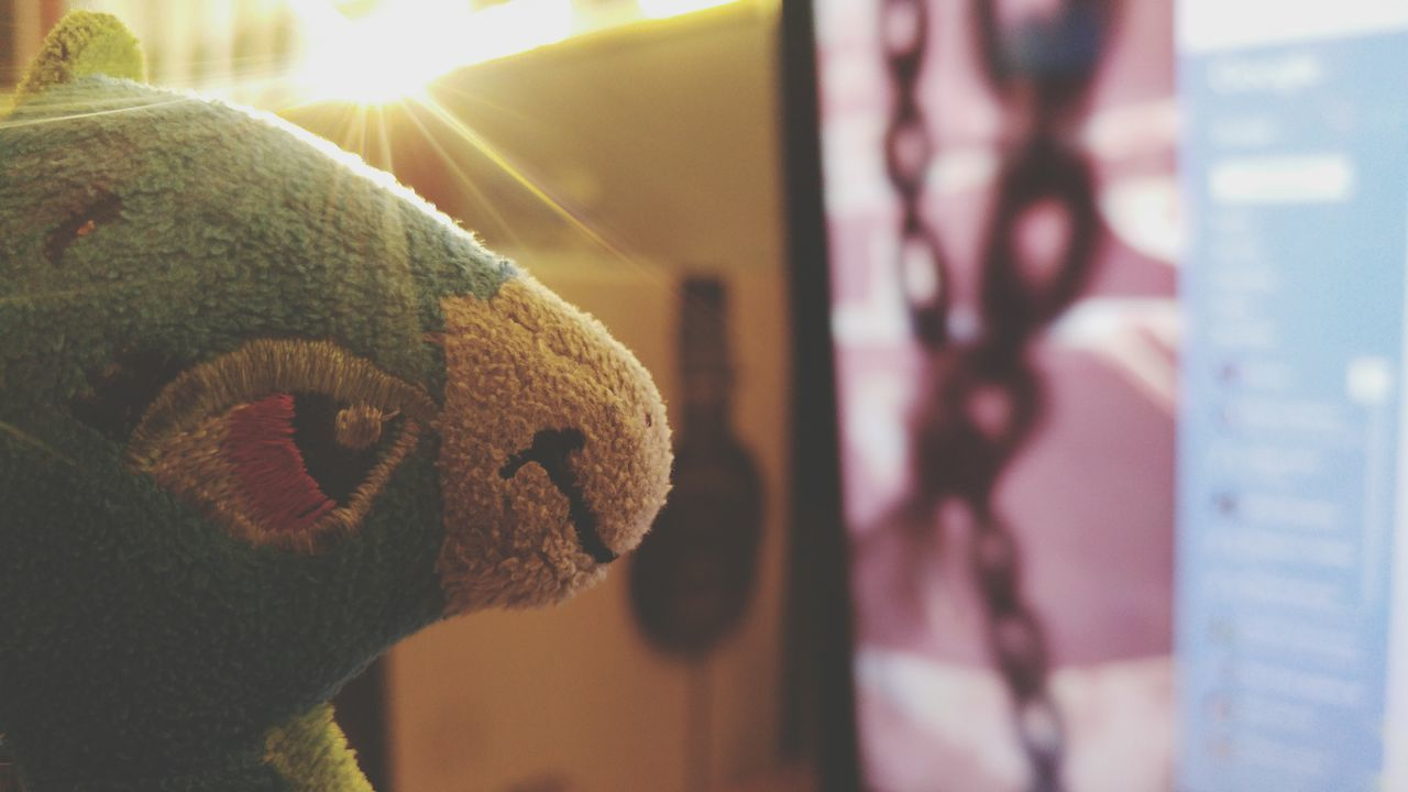 close-up, stuffed toy, focus on foreground, animal representation, no people, indoors, teddy bear, day, childhood, domestic animals, animal themes, mammal
