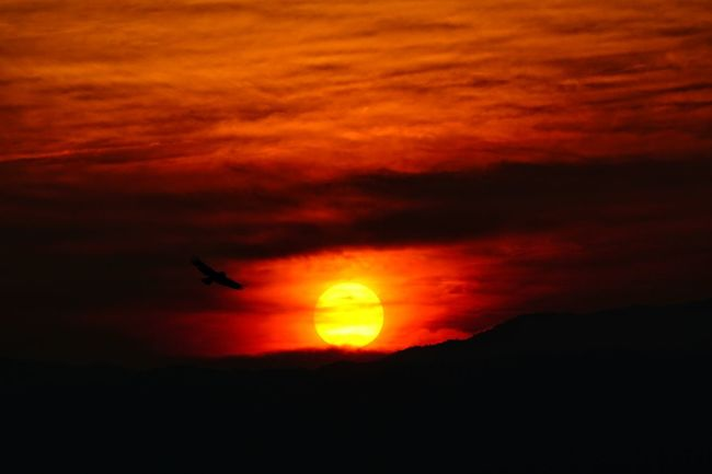 Capture The Moment Bird Silhouette Sunset Light And Shadow