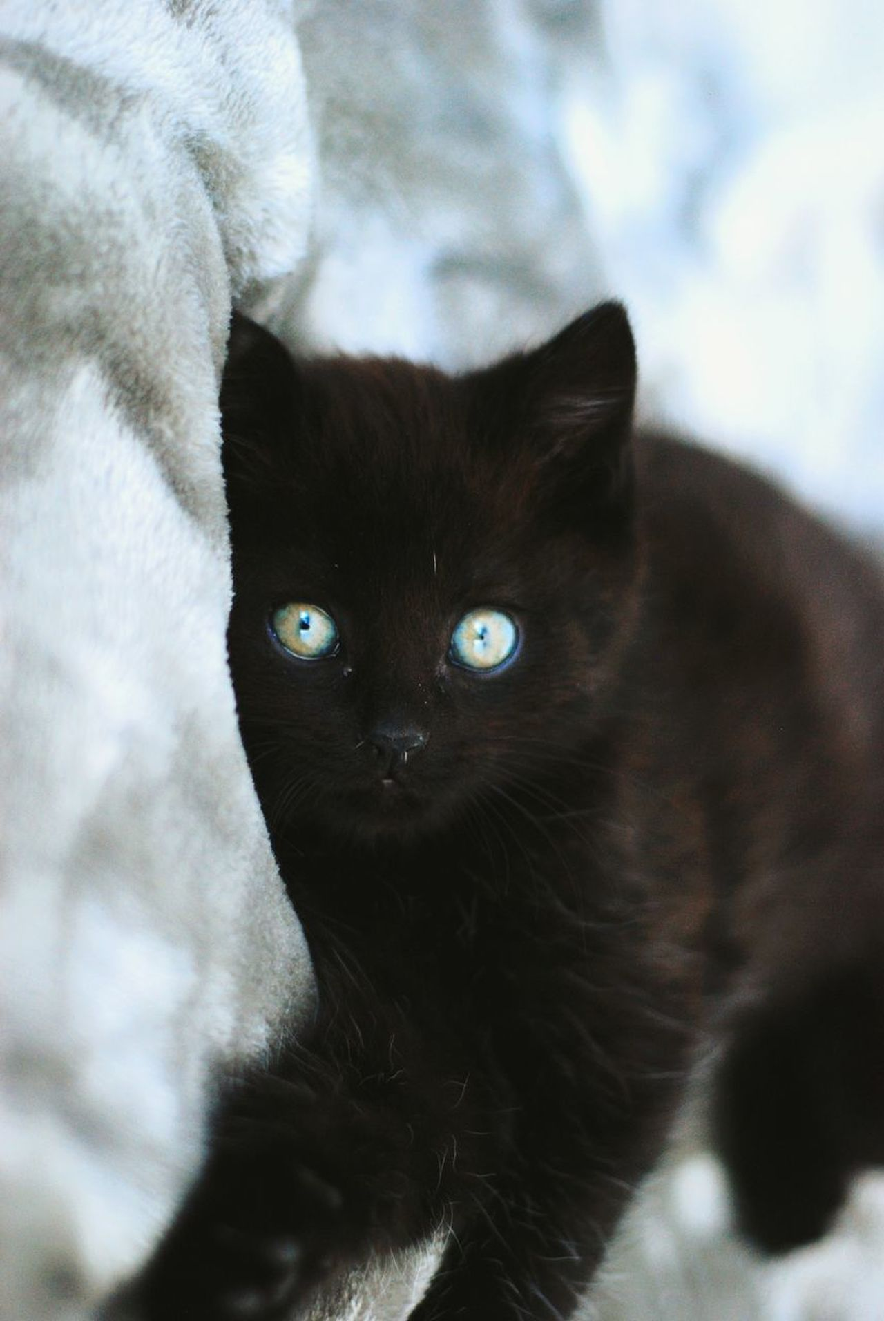 Cat Eye Animal Kitty Family Pets Kitten Cats Of EyeEm Catsofinstagram Catlovers Catlover Cateyes One Animal Domestic Cat Black Color Looking At Camera Feline Portrait Yellow Eyes Mammal Domestic Animals Animal Themes No People Close-up Evil BYOPaper!