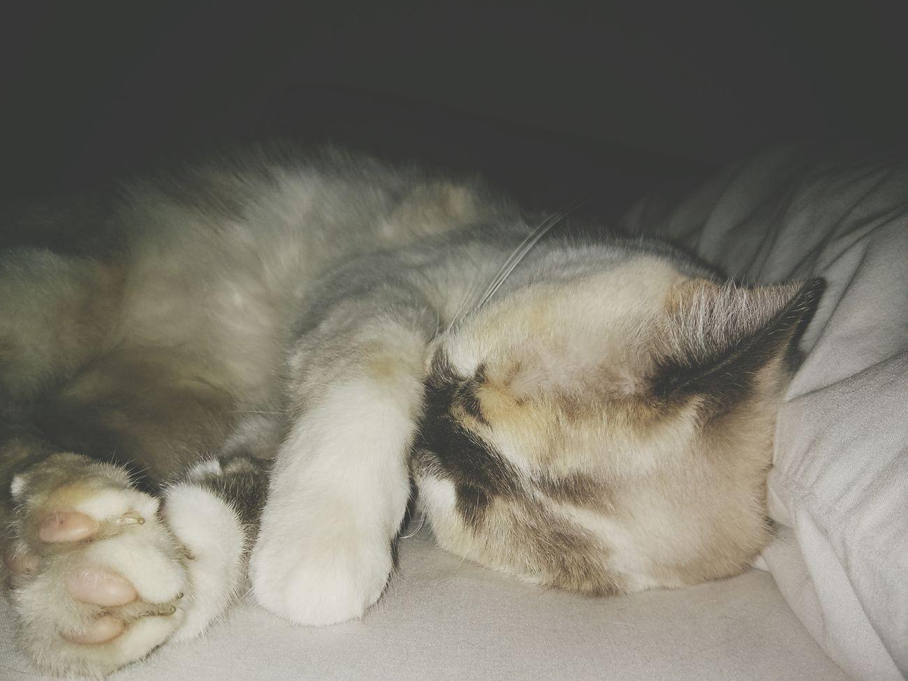 30 minutos más, por favor. Lunes Napping Dormir Cats