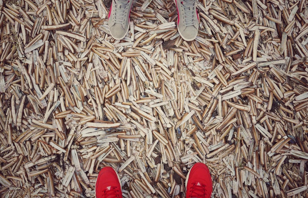 Let the games begin! Razor Shells Razor Clams Razorshells Being A Beach Bum Walking On The Beach Beachphotography Shoes Looking Down Making Noise Walking Around