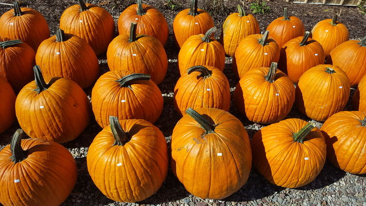 EyeEm Selects Pumpkin Food And Drink Food No People Abundance Day Healthy Eating Halloween Indoors  Freshness Close-up