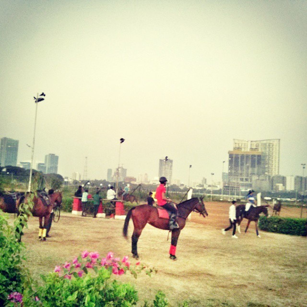 Royal Western India Turf Club Mumbai Horse Race Picoftheday Pastal Power