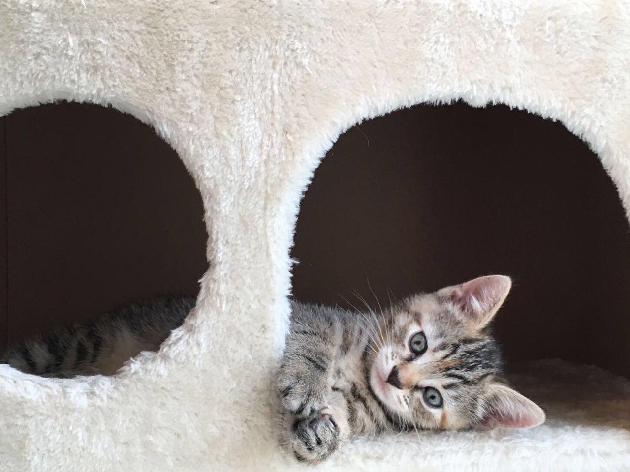 Beautiful stock photos of baby katzen,  Domestic Animals,  Domestic Cat,  Feline,  Indoors