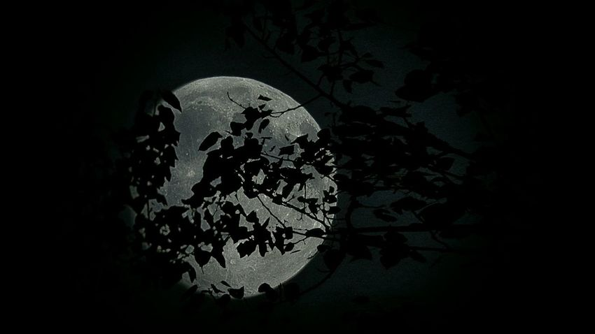 Moon Moonlight Moon Shots Silhouette Tranquility Light And Shadow Black & White Eye4photography  Peace And Quiet Tranquil Scene Sky_collection Goodnight Moon