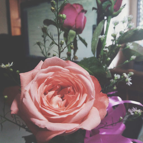 Roses🌹 Roses Flowers  Rose Pink Roses World 🌹❤️🌹
