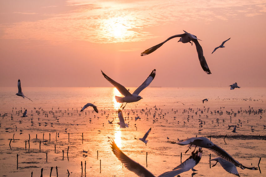 birds flying with twilight. Beauty In Nature Bird Evening Sky Flying Freedom Idyllic Mid-air Motion Nature Orange Color Outdoors Scenics Shore Sky Spread Wings Sun Sunset Thailand Thailand_allshots Tranquil Scene Tranquility Water