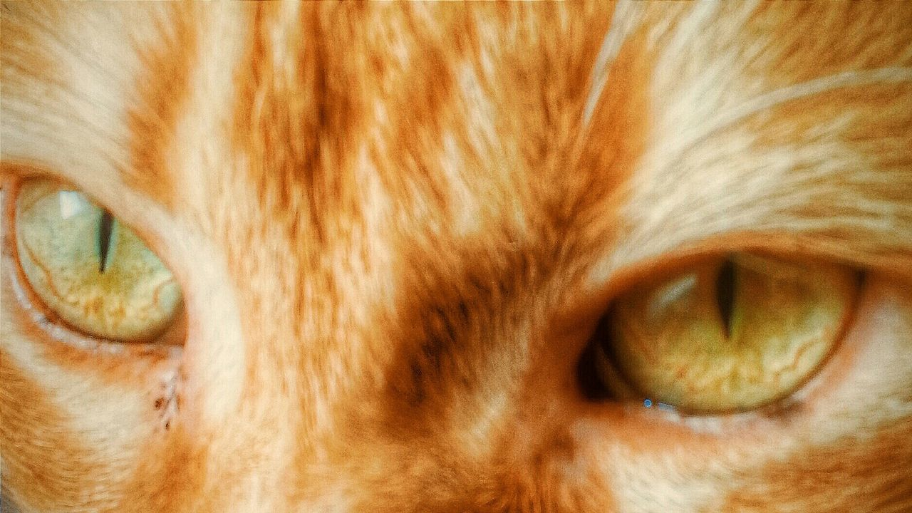 """""""Cat's eyem"""". Details Dettaglio Cat Eyes Occhi Di Gatto Occhi Green Eyes Occhiverdi Animals Pets Gatto Gatti Smartphone Photography with Galaxy Note 2 and Camerazoomfx. Enhanced with Perfectlyclear"""