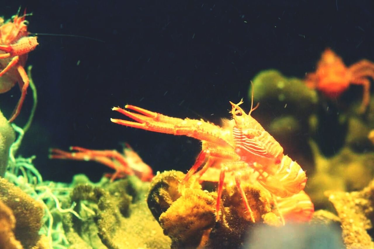 Shrimps Shrimp! Shrimpaquarium Vancouver Vancouveraquarium Vancouver BC Colors And Patterns