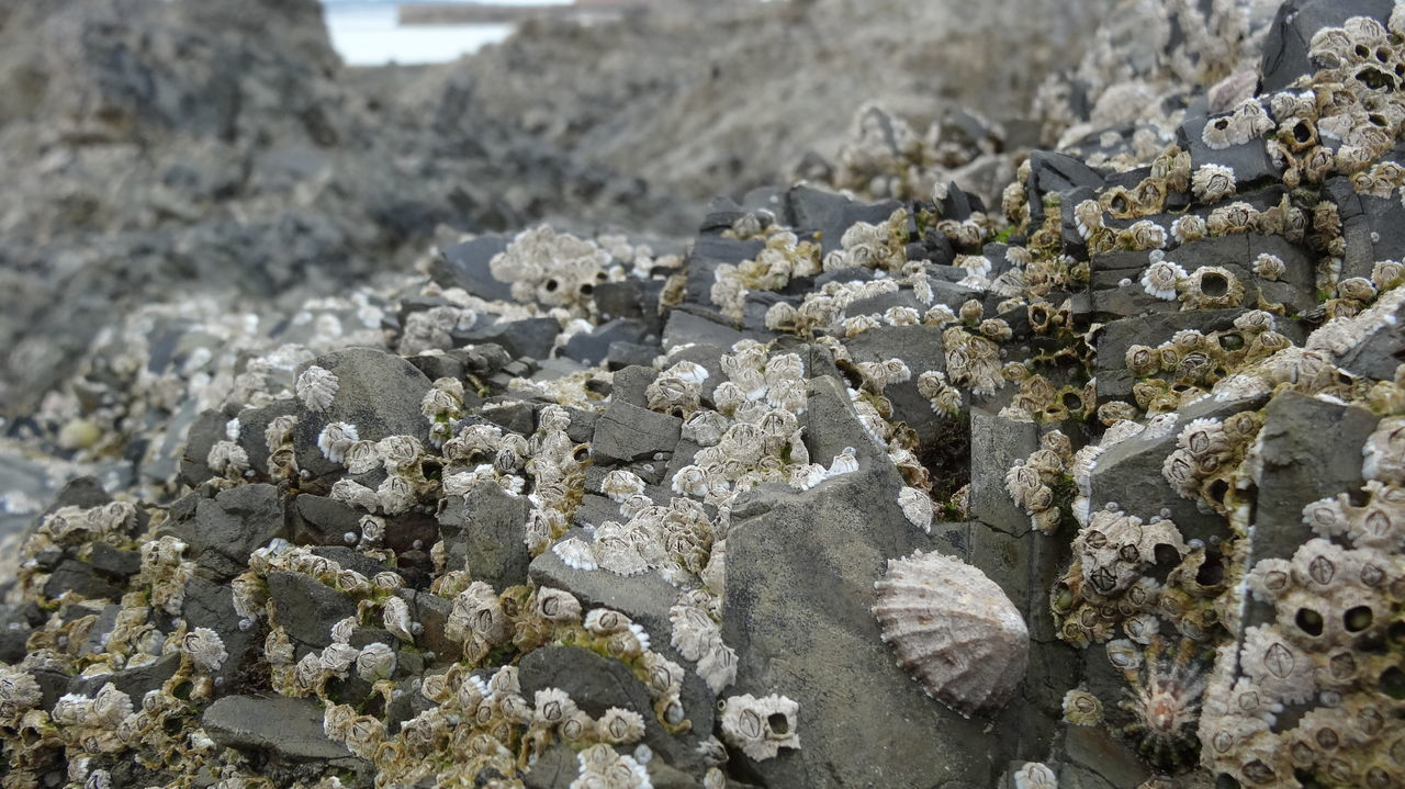 Abundance Backgrounds Beauty In Nature Close-up Day Detail Focus On Foreground Ground Growing Growth Natural Pattern Nature No People Outdoors Pebble Plant Rock Rock - Object Selective Focus Stone Stone - Object Tranquility St Aubins Bay, Jersey