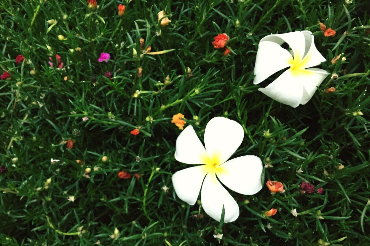 Grassfield Grass Grass And Flowers Spring Spring And Fall Summer Fresh Different Mix And Match Flowers