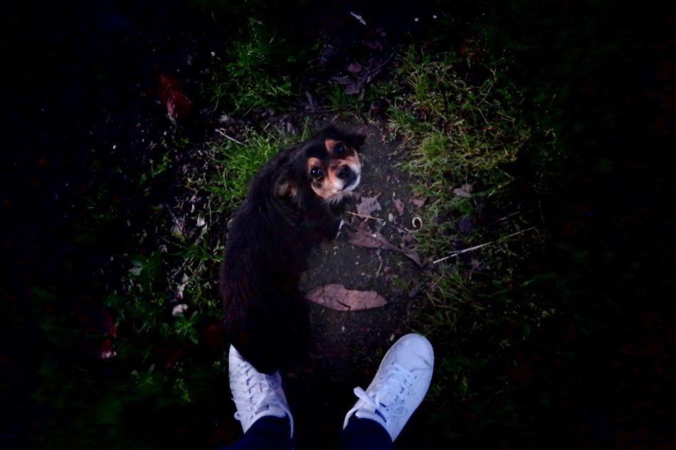Dog Dog Love Samsungphotography SamsungLens @cameraout