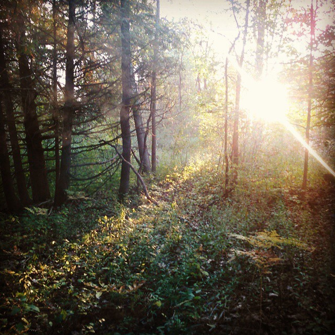 A walk in my woods Naturecalls Woods Enchanted  Sunlight Beautiful LovinLife