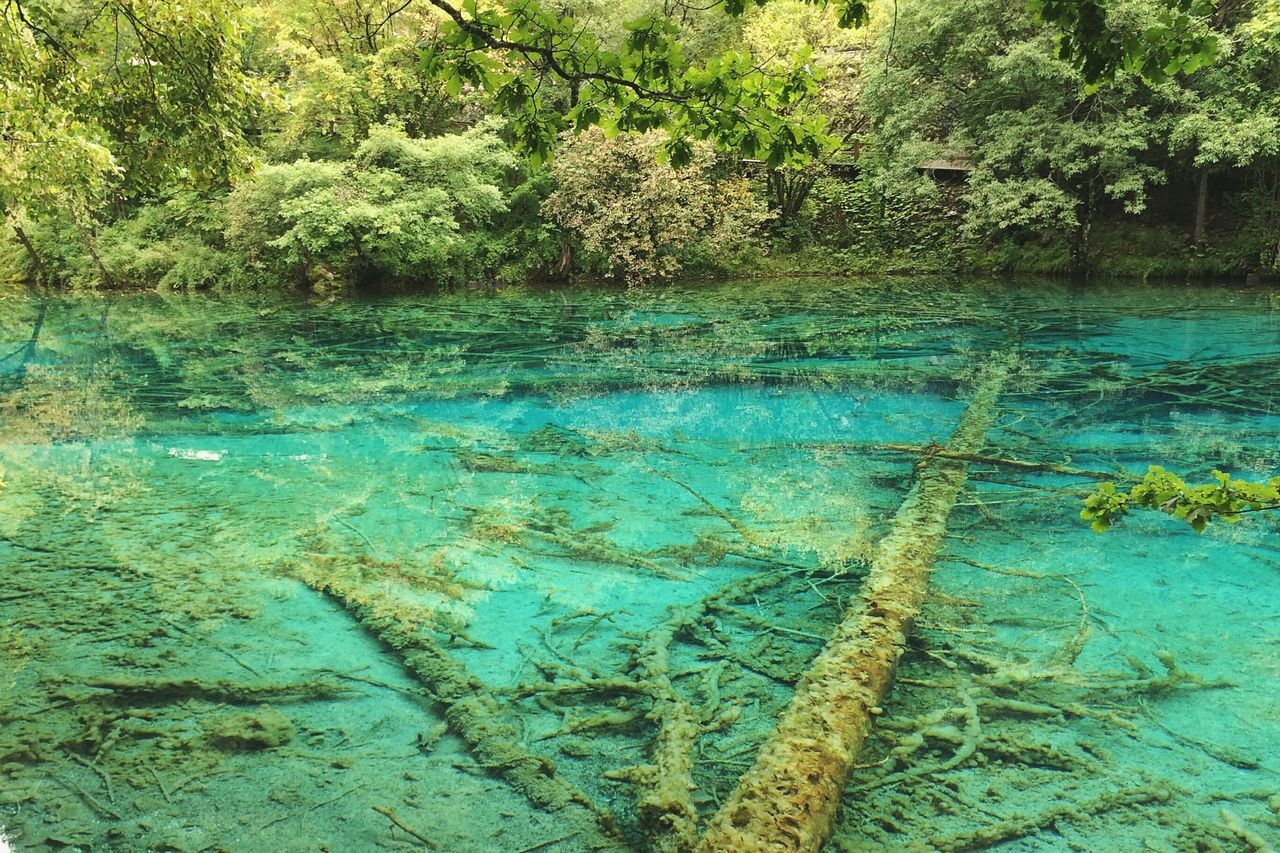 Water No People Backgrounds Textured  Nature Tree Beauty In Nature Abstract Fragility Horizontal Landscape Travel China Freshness Jiuzhaigou Sichuan Province Tourism Travel Destinations Beauty In Nature Lake Reflection Sichuan Day Outdoors Blue