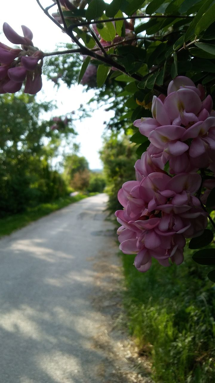 flower, day, nature, freshness, pink color, beauty in nature, outdoors, petal, growth, fragility, no people, close-up, tree, flower head
