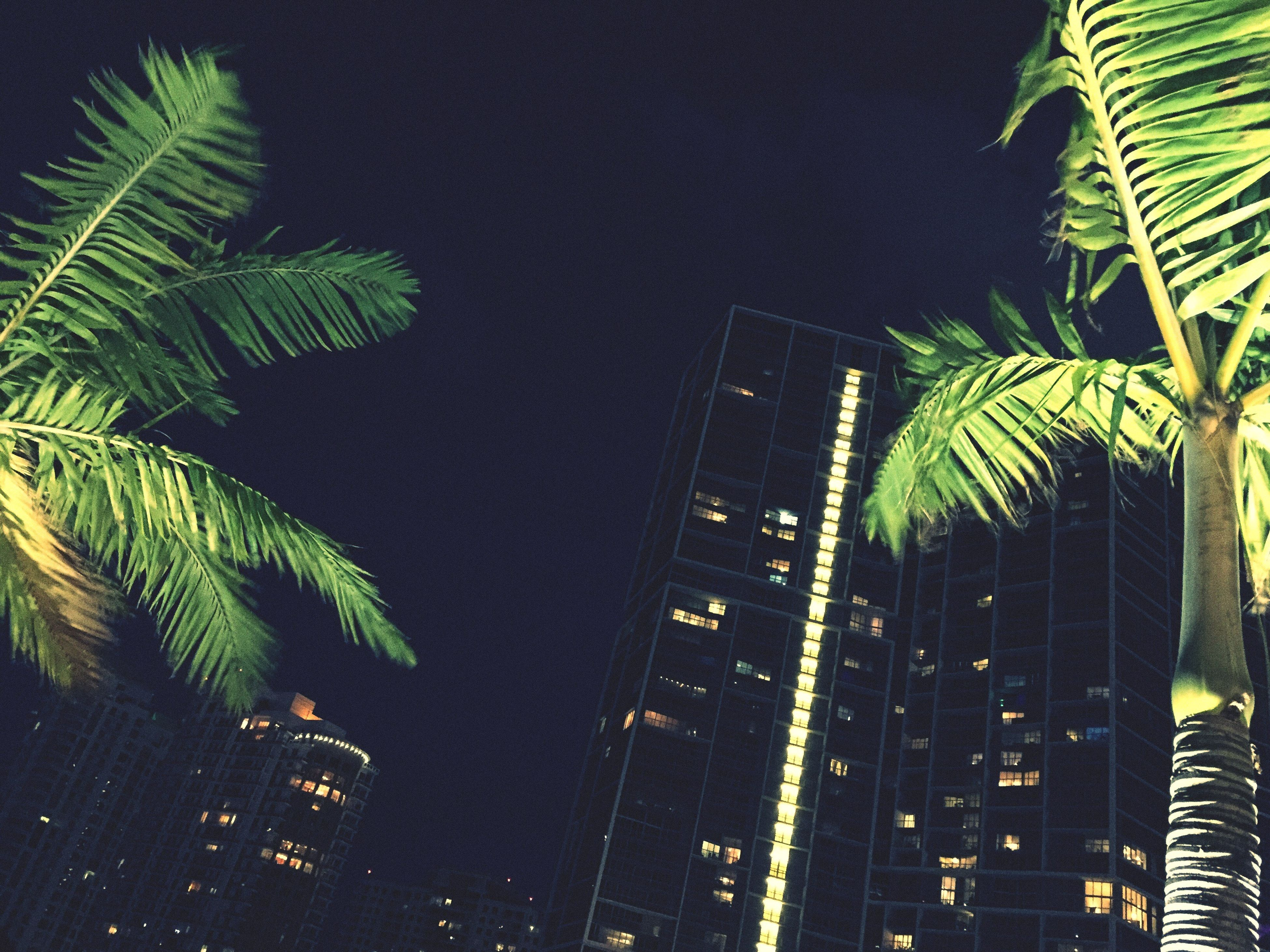 palm tree, leaf, growth, low angle view, tree, green color, palm leaf, nature, outdoors, illuminated, tall - high, no people, sky, green, beauty in nature, close-up