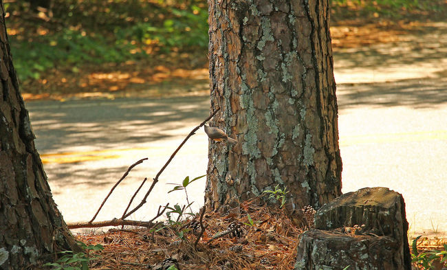 Little bird on tree. Beauty In Nature Focus On Foreground Nature No People Outdoors Tranquil Scene Tranquility Tree Tree Trunk Wood - Material