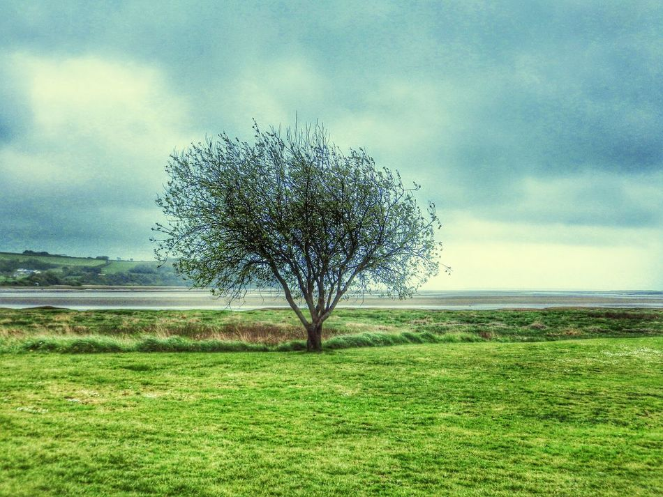 Wales Trees Green Landscape Seascape Taking Photos Photography Countryside Nature Clouds