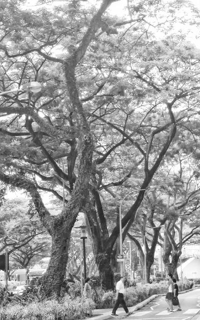 Saturday Afternoon Trees City