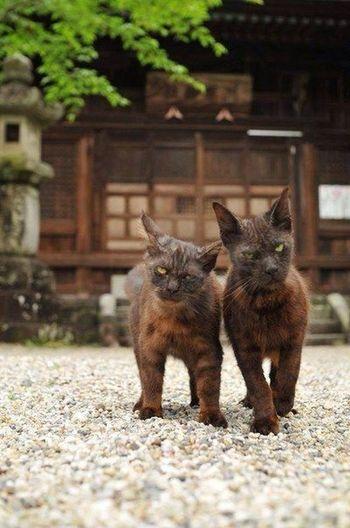 Cat Funny Cute Pets