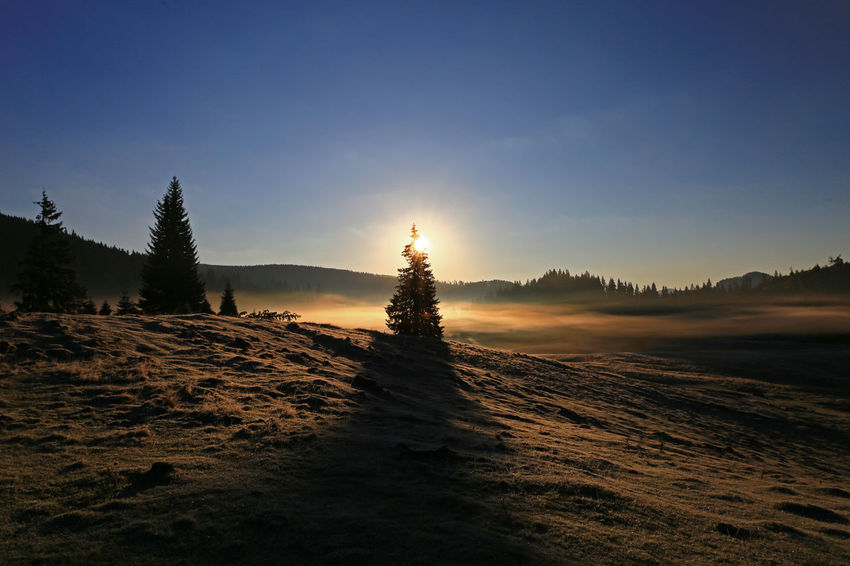 Dawn Light EyeEmNewHere Sunlight Beauty In Nature Early Morning Light Earlymorningphotography Landscape Nature No People Outdoors Pine Tree Scenics Tranquil Scene Tranquility Transylvania💕 Tree