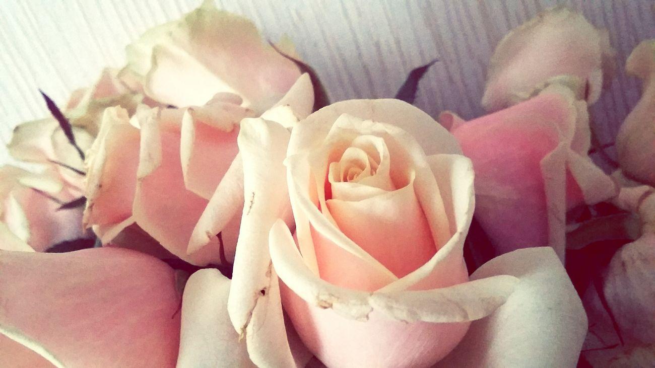 Rose 🌹🌹🍃 😻😻😻❤️