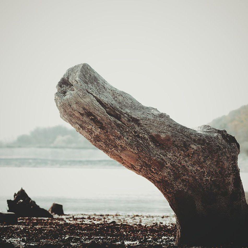 Озеро уже давно не сокрыто от людских глаз, детей уже давно не пугают историями о подводных чудищах. История одревенела⌛ (болотныекипарисы на озере в пос. Сукко ) Wigandt_photo Wigandtphoto Wigandt Sonyalpha Minolta Russia Россия Анапа Anapa Photorussia TravellingRussia