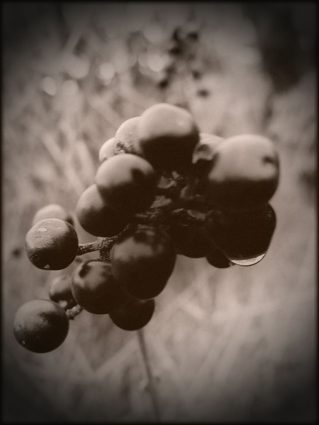 Berrys Water Drops Nature Black And White Photography Outdoor Photography No People