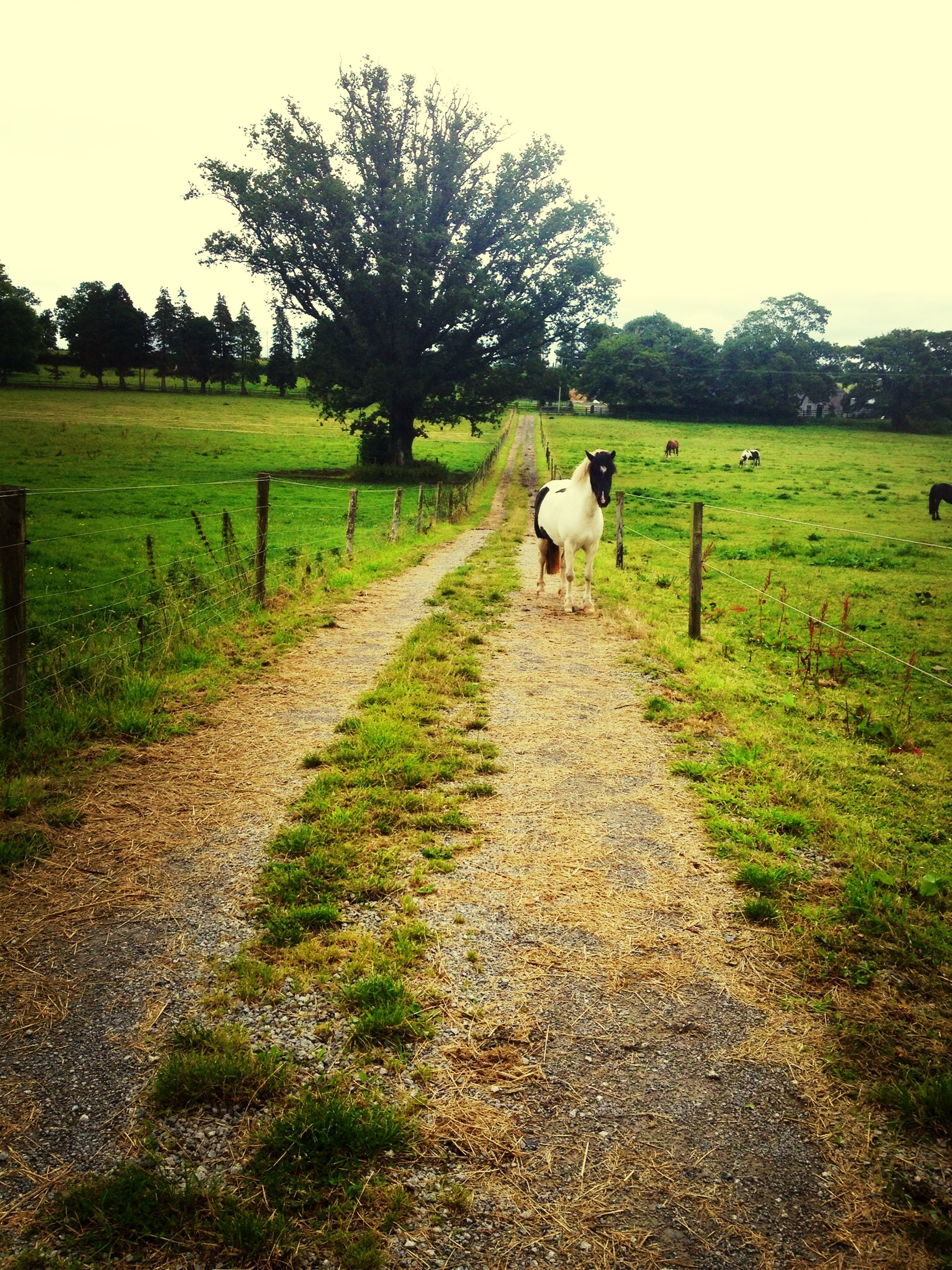 domestic animals, grass, animal themes, field, mammal, landscape, one animal, grassy, livestock, the way forward, rural scene, pets, dog, nature, walking, full length, tranquility, pasture, sky, tranquil scene