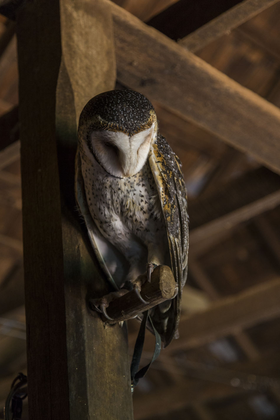 Beautiful stock photos of nail, Animal Themes, Architectural Column, Architecture, Barn Owl