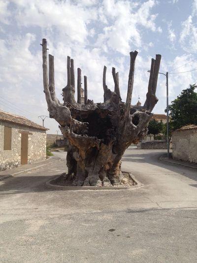 Olma de Frumales. Frumales SPAIN Tree