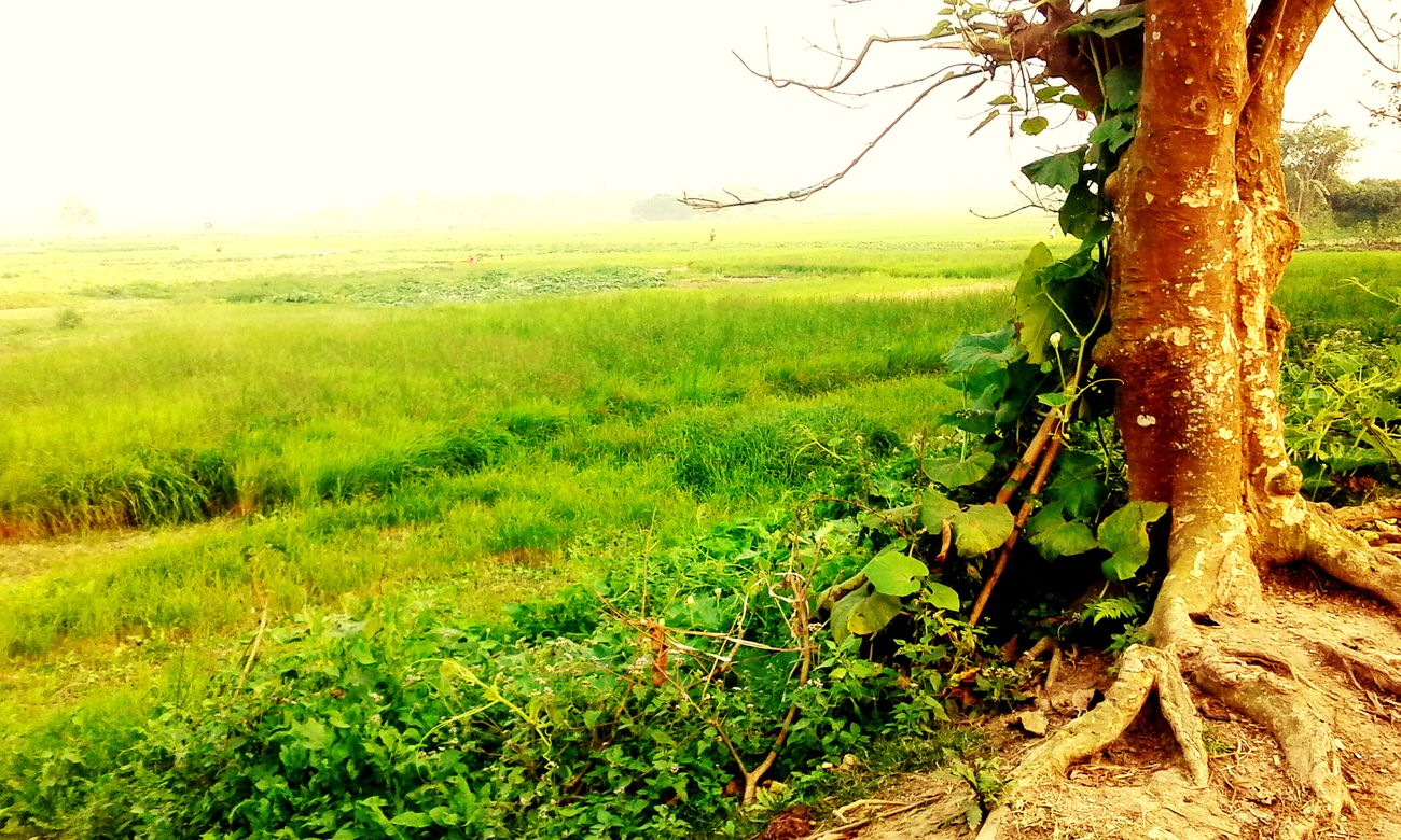 It waw at comilla on a winter morning