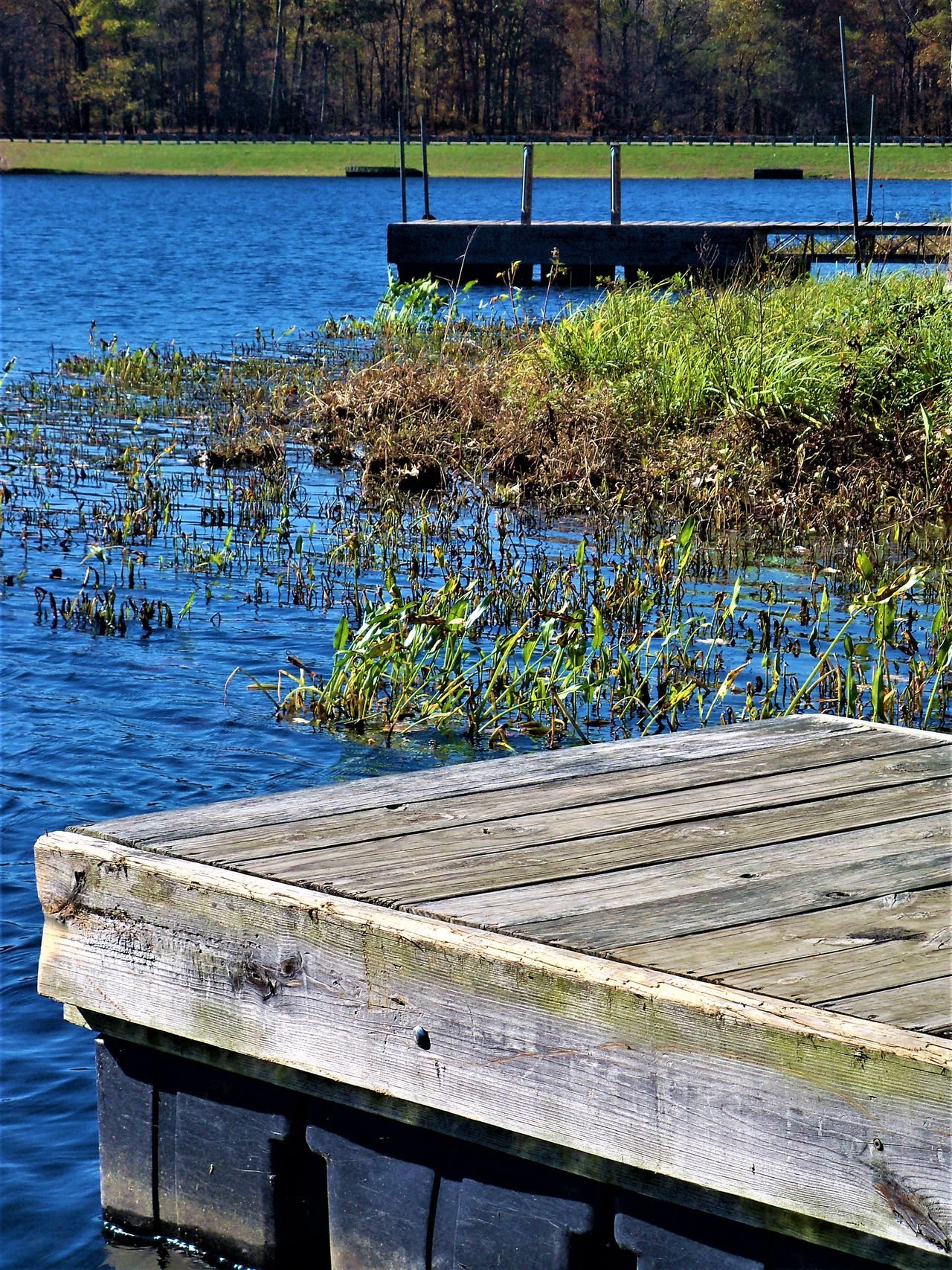 Lake Pier Beauty In Nature Day Growth Indiana Lake Lake View Lakeshore Lakeside Lakeview Nature No People Outdoors Park Pier Plant Plants Scenics Tranquility Water Water Plants Wooden Wooden Pier Woodenpier