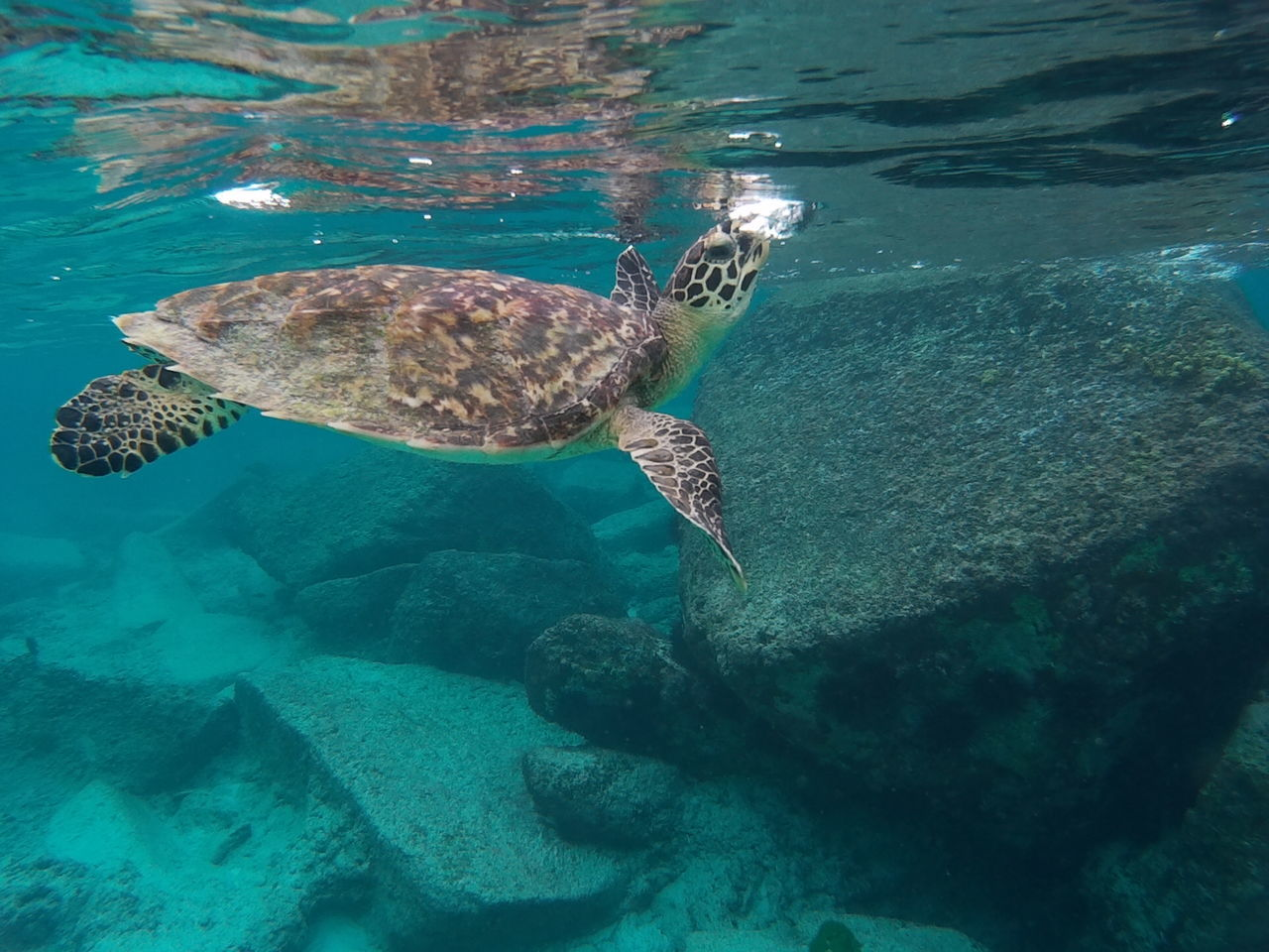 Underwater Swimming Sea Animal Themes Sea Turtle UnderSea Animals In The Wild Sea Life Water Beauty In Nature No People Tropical Climate Animal Wildlife Animals In The Wild Nature Beauty In Nature Scuba Diving Snorkeling Seychelles Seychellen Seychelles Islands UnderSea Sea Turtle