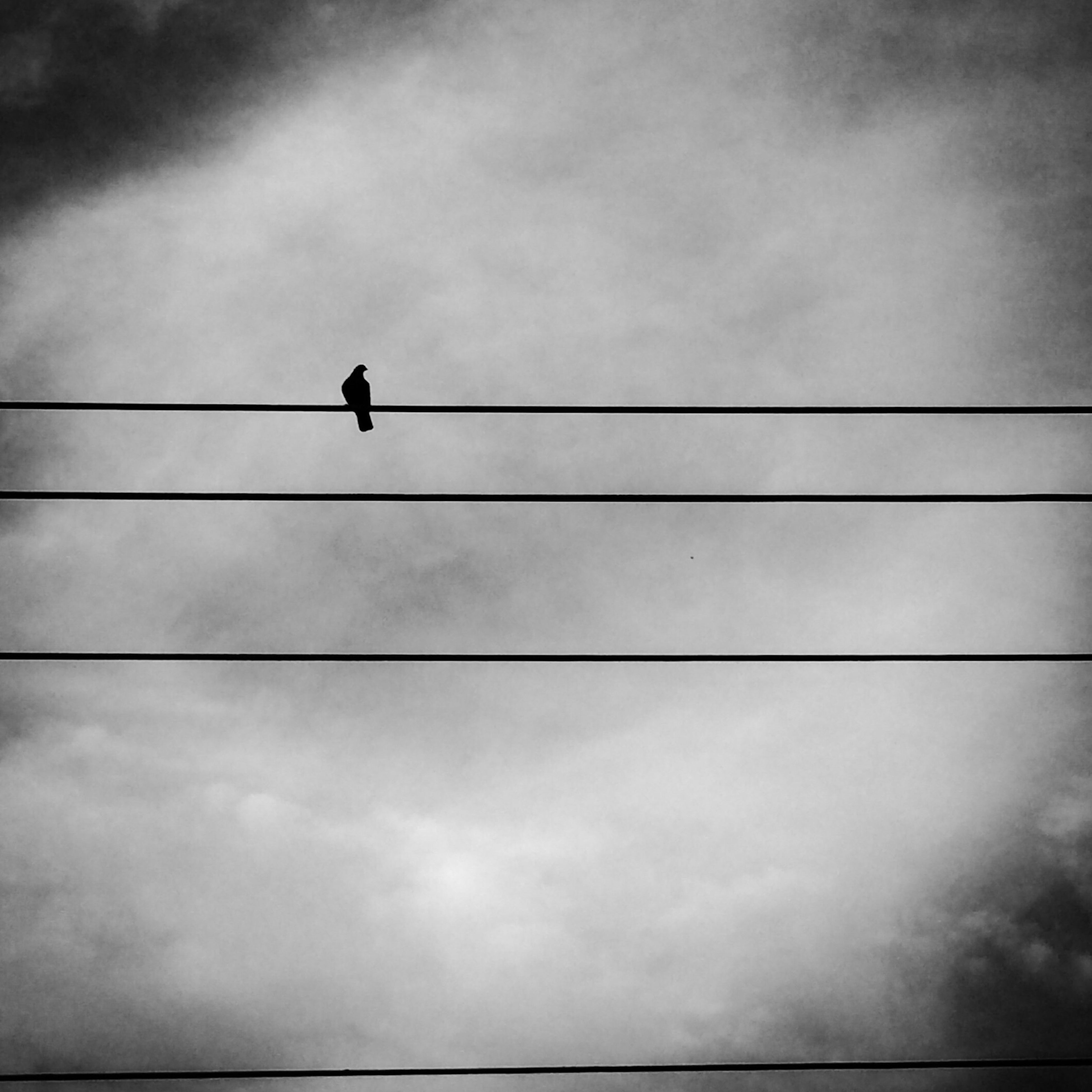 low angle view, bird, sky, animal themes, silhouette, animals in the wild, wildlife, perching, cable, cloud - sky, one animal, power line, street light, cloudy, cloud, connection, electricity, nature, pole, lighting equipment