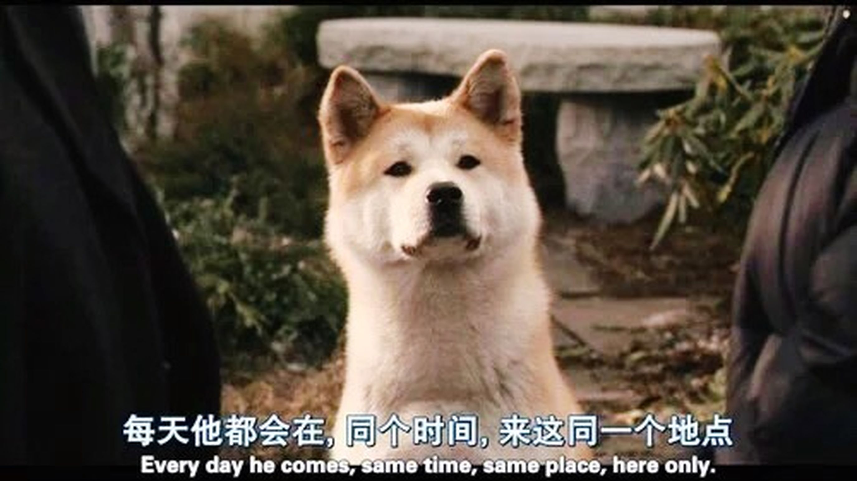 - Are you going with that dog every day? - It's amazing. Every day. ——你每天都跟那狗一起回家呀? ——真不可思议,每天都这样。 ——《#忠犬八公的故事#》