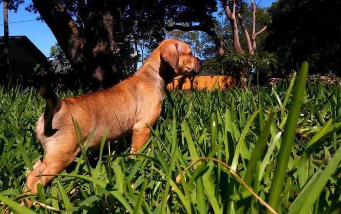 Puppy Love ❤ Up Close & Personal So Sweet ♥ In The Grass Puppy Power