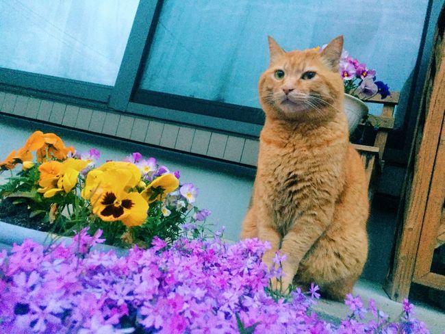 うめちん Cat Love Lovely Flower Cat Lovers IPhone 😚 😚 😚