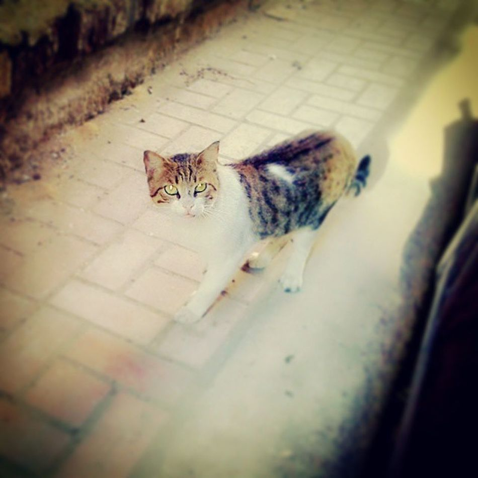 Lovely_Cat Street_photography My_sister_is_my_happiness Love_you_Sham Lovely_moments_with_sham Marwa_Saber