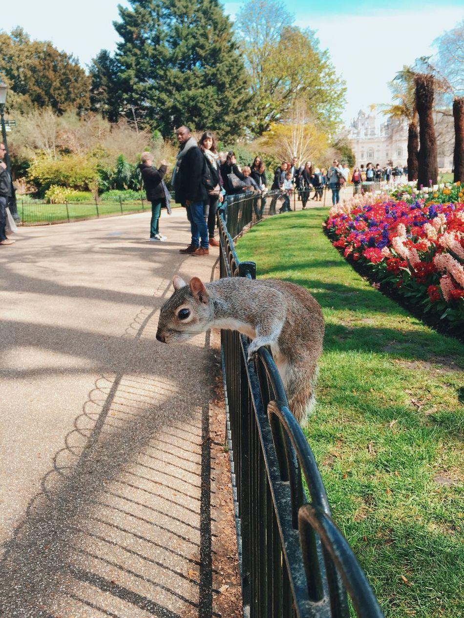 Beautiful stock photos of eichhörnchen, Animal Themes, Animal Wildlife, Animals In The Wild, Day