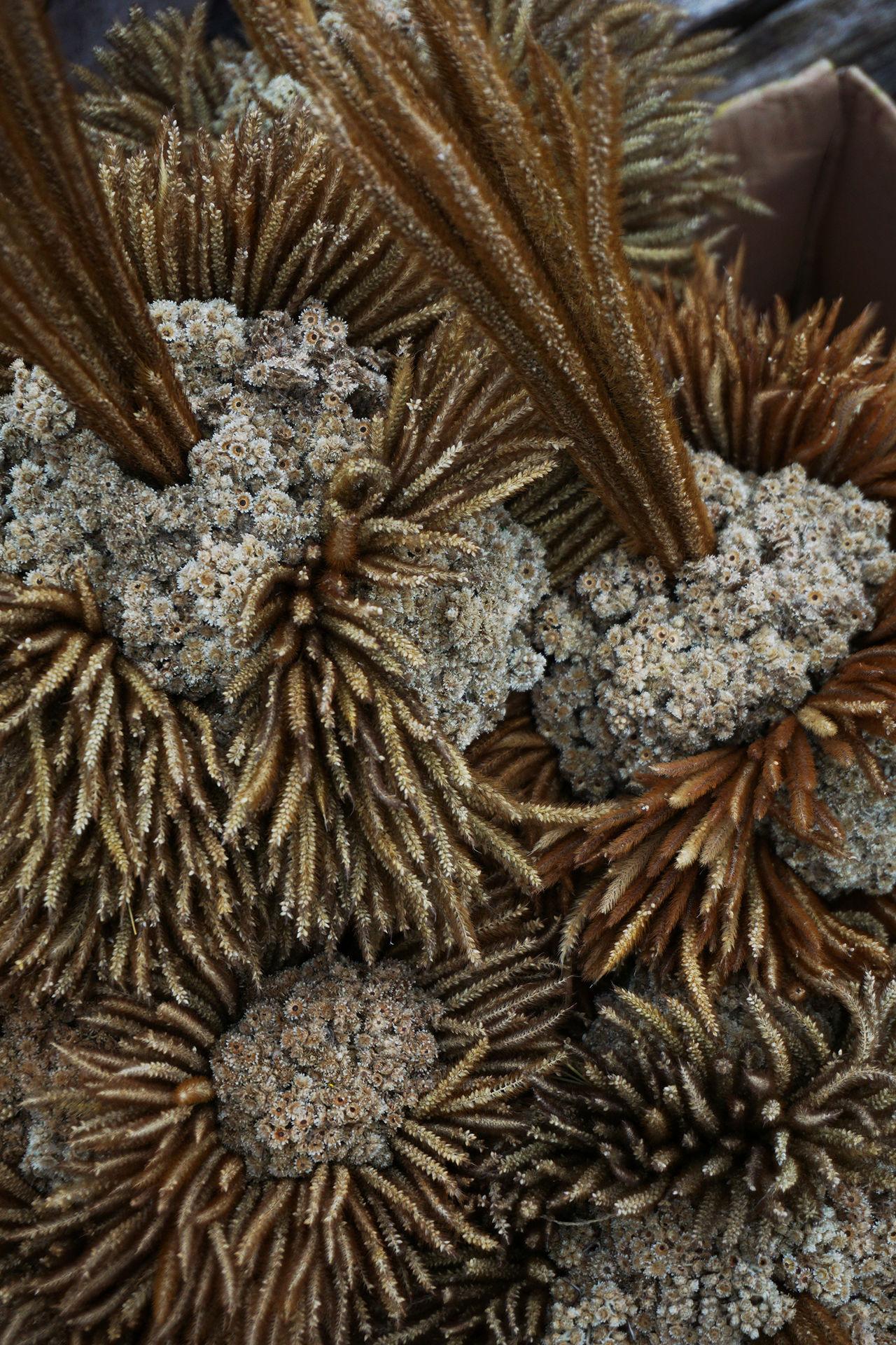 Eternal Flowers at Merapi Jogjakarta #beautiful #bouquet #brown #decoration #driedflowers #Edelweiss Flower #eternal Flower #eternity #forest #holiday #isolated #Jogjakarta #merapi #Mountain #Nature  #scent #travel @white EyeEm Selects EyeEmNewHere