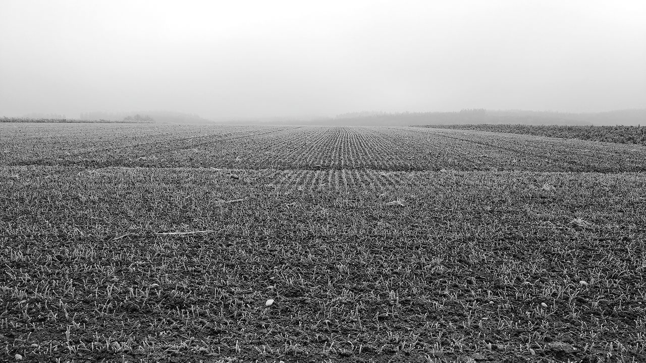 Agriculture Rural Scene Plowed Field Nature Pattern Beauty In Nature Landscape Sparse No People Scenics Day Outdoors Blackandwhite Black & White