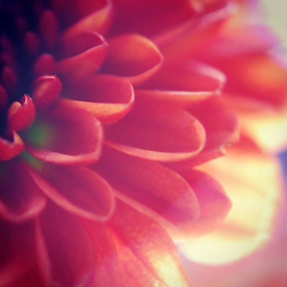 Lead_me_to_oblivion Macro Closeup Nikon Flower Petals Light Photography Nature