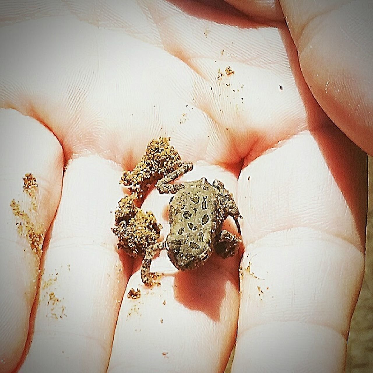 Tiny Toad Nature Outdoors Close-up Human Hand Day Animal Themes Funday Exploring New Territory Outdoors