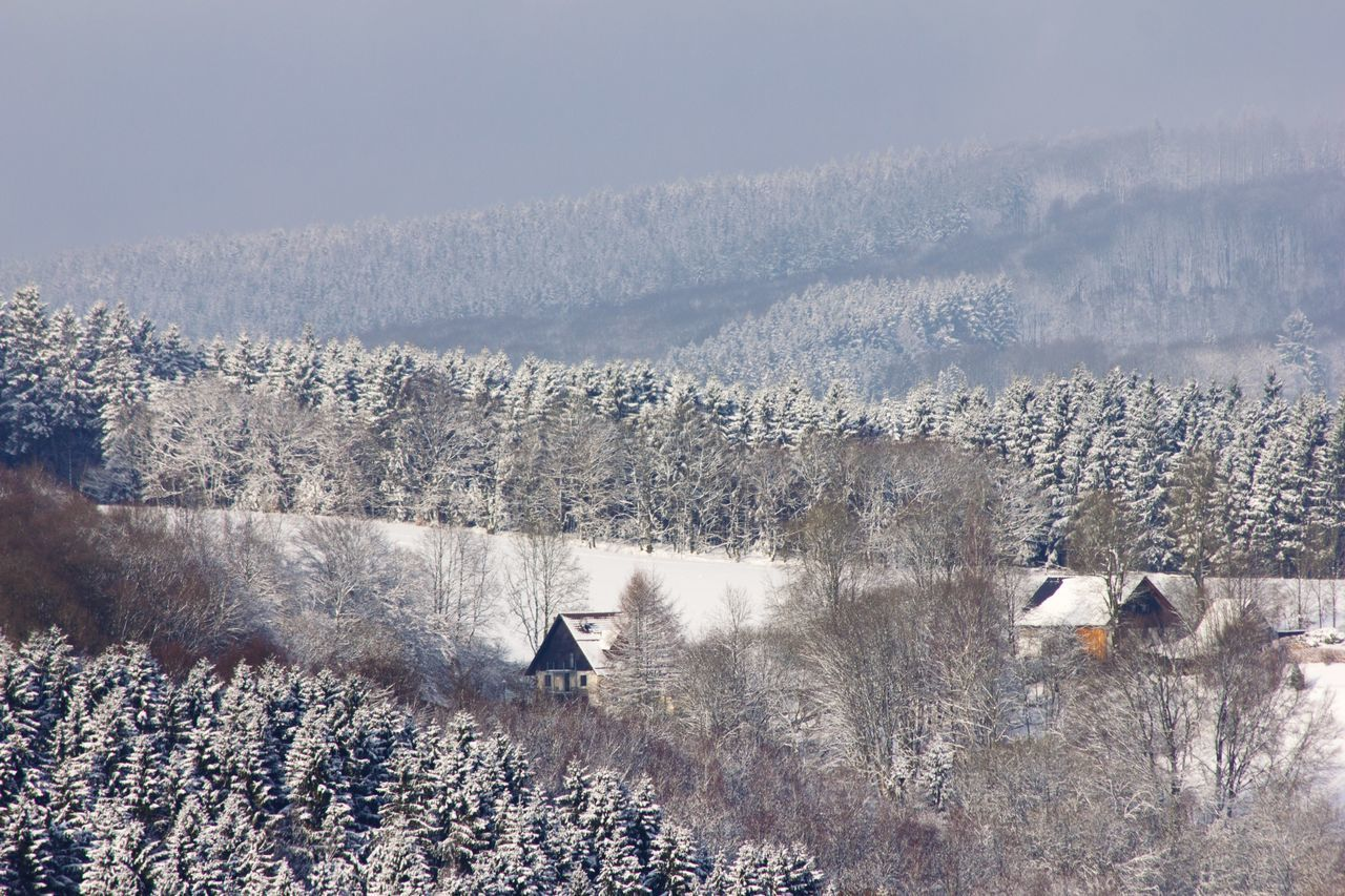 High Angle View Of Trees On Snow Covered Landscape